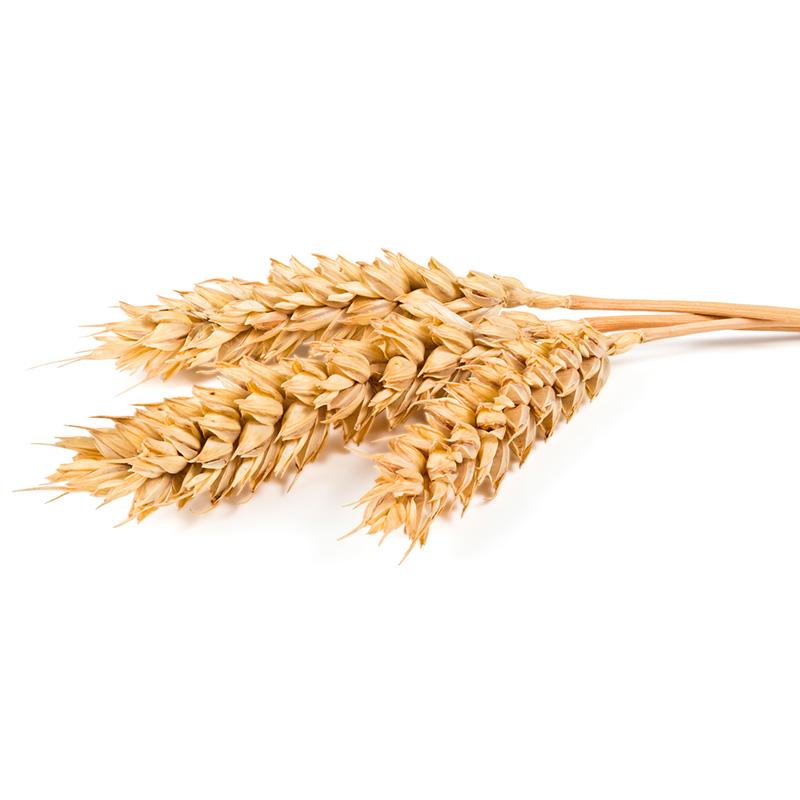 Fettuccine al germe di grano con ciliegie, menta e burrata di bufala